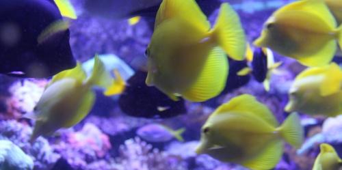 Aquarium Skansen Stockholm @ Reise Stockholm
